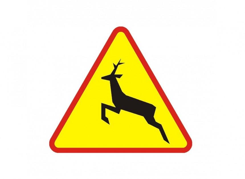 Czy uzyskam odszkodowanie za wypadek z udziałem dzikiego zwierzęcia?